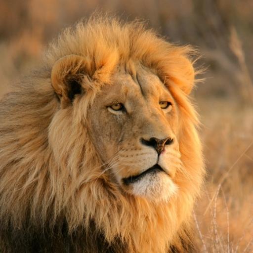 SlidePuzzle - Lion