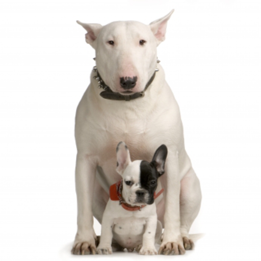 Bull Terrier with a puppy Slide Puzzle