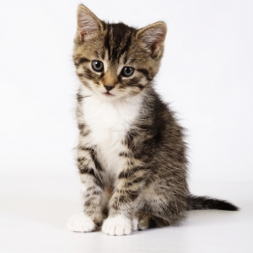 iGuides - Picking A Kitten