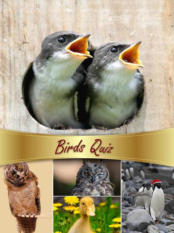 Birds Quiz & Puzzles screenshot 5