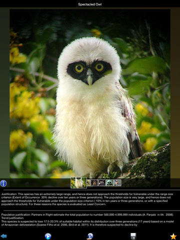 Owls Species screenshot 7