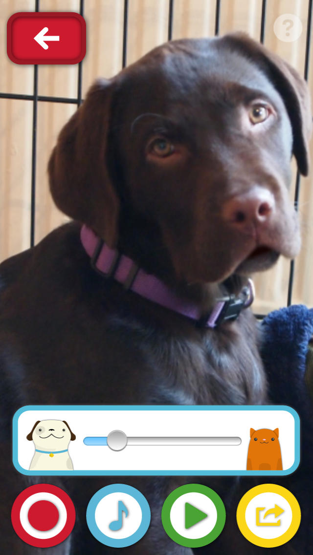 My Talking Pet Classic screenshot 4