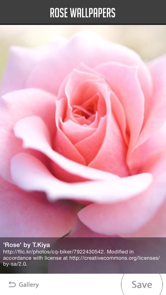 Rose Wallpaper screenshot 4
