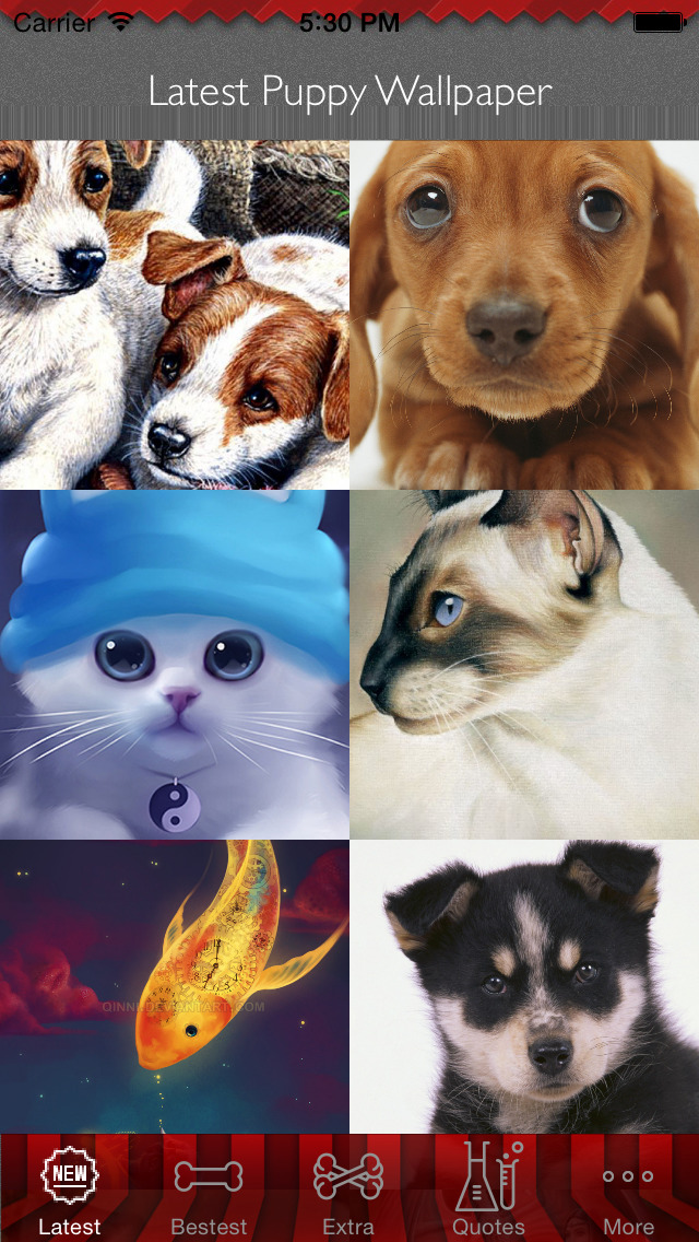 Best HD Puppy Art Wallpapers for iOS 8 Backgrounds: Animal Theme Pictures Collection screenshot 1