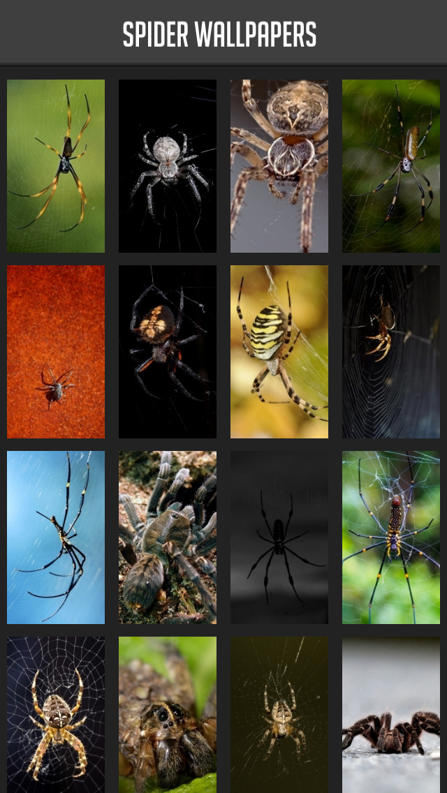 Spider Wallpapers screenshot 1