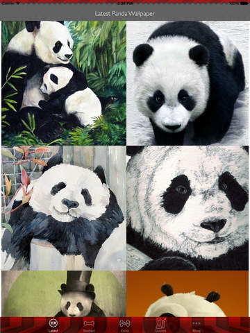 Best HD Panda Art Wallpapers for iOS 8 Backgrounds: Animal Theme Pictures Collection screenshot 6