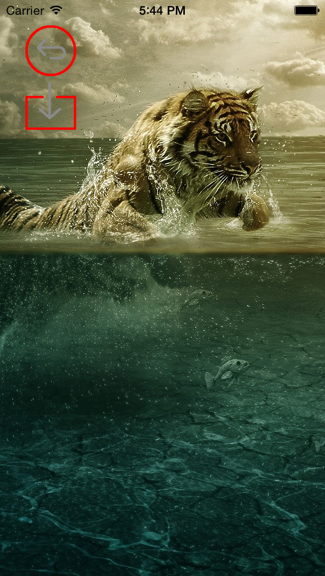 Best HD Tiger Art Wallpapers for iOS 8 Backgrounds: Wild Animal Theme Pictures Collection screenshot 3