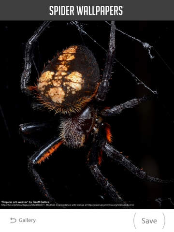 Spider Wallpapers screenshot 9