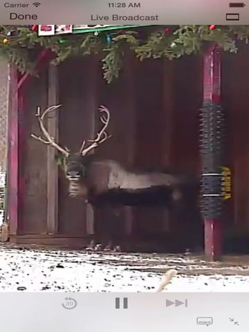Reindeer Cam Live screenshot 4