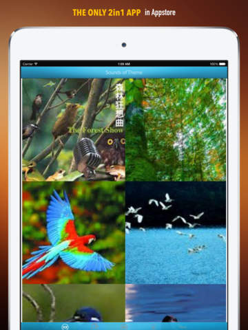 Nature Sounds Ringtones and Wallpapers: Theme your Phone to be back to the Nature screenshot 6