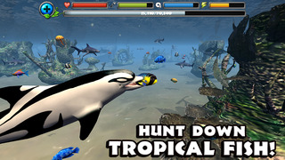 Dolphin Simulator screenshot 4