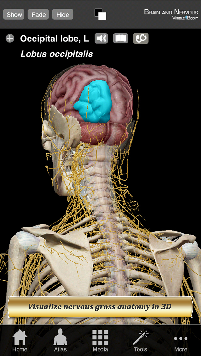 Brain and Nervous Anatomy Atlas: Essential Reference for Students and Healthcare Professionals screenshot 1