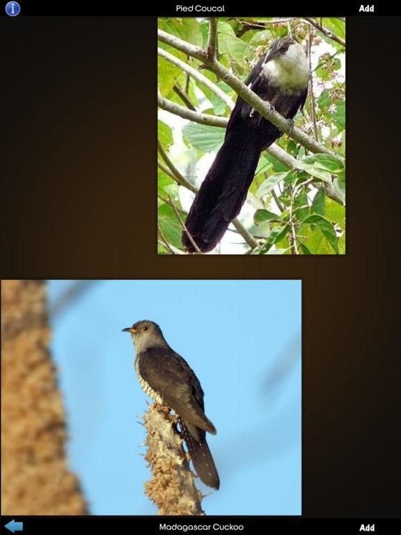Cuckoos Collection screenshot 9