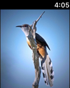 Cuckoos Collection screenshot 14