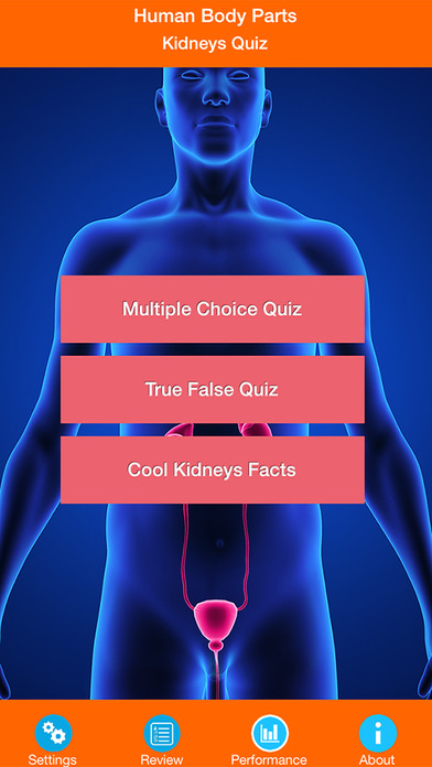 Human Body Parts : Kidneys Quiz screenshot 1