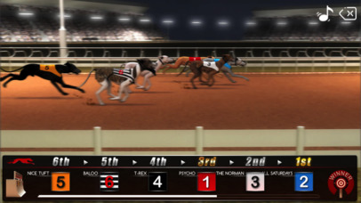 Greyhound Racing ® screenshot 1