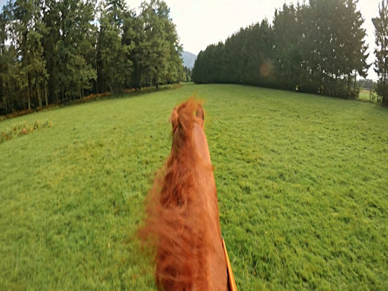VR Horse Riding Simulator with Google Cardboard screenshot 6