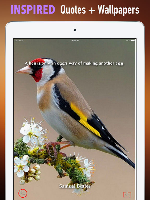 Goldfinch Wallpapers HD- Quotes and Art screenshot 10
