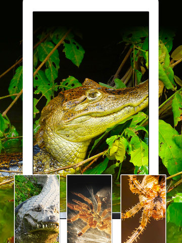 Snakes, Spiders, Lizards and Reptiles - Animals Wallpapers screenshot 8