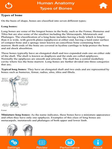 Anatomy - Skeletal System screenshot 8