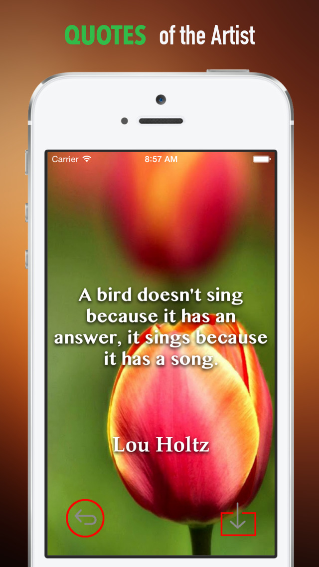Tulip Wallpapers HD: Quotes Backgrounds with Art Pictures screenshot 4