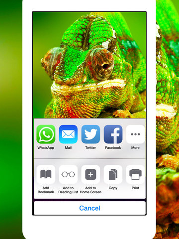 Snakes, Spiders, Lizards and Reptiles - Animals Wallpapers screenshot 7