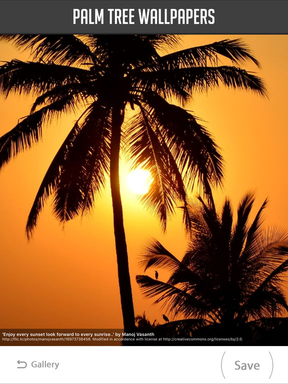 Palm Tree Wallpaper screenshot 8
