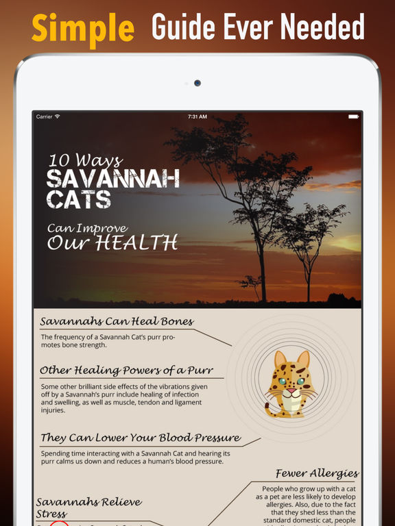 Health Benefits of Owning a Cat:Positive Effects and Guide screenshot 6