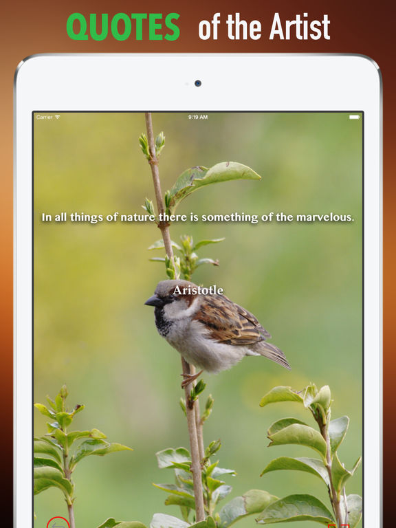 Sparrow Wallpapers HD: Quotes Backgrounds screenshot 9