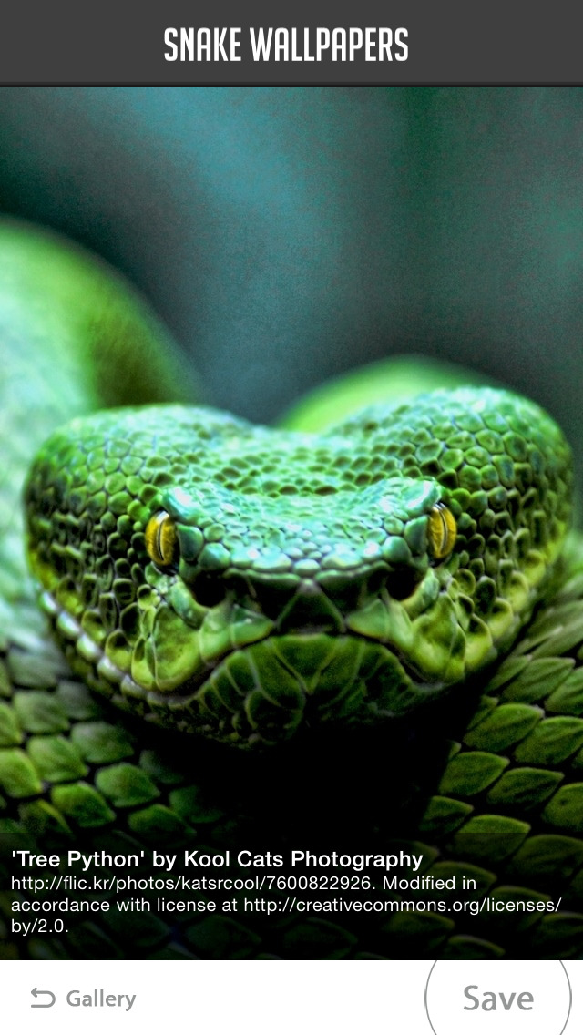 Snake Wallpaper screenshot 4