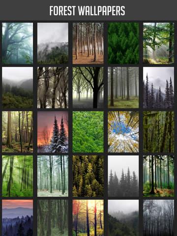 Forest Wallpapers screenshot 6