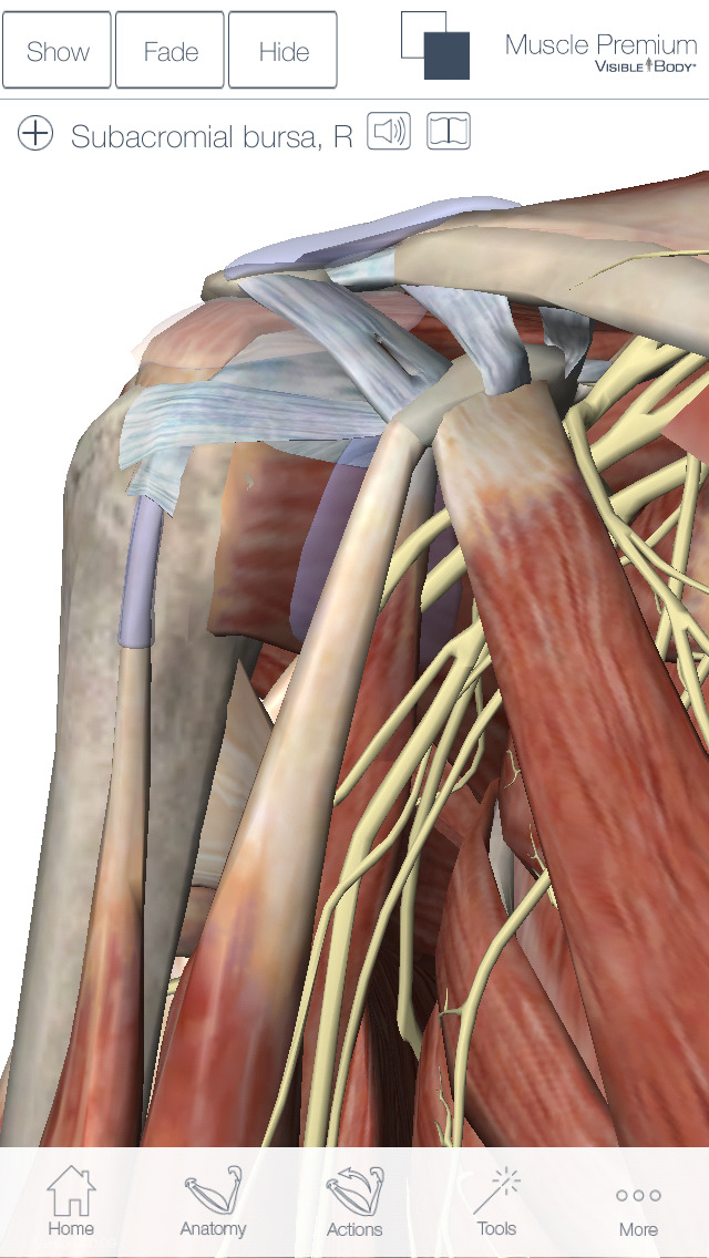 Muscles & Kinesiology screenshot 2