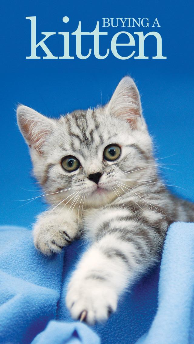 Buying A Kitten screenshot 1