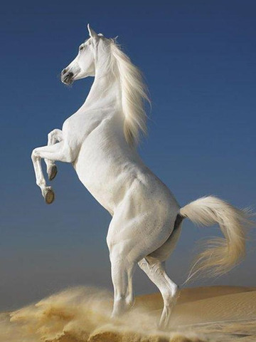Horse Wallpapers HD - Collection of Running Horses screenshot 10