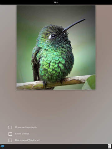 Hummingbirds Guide screenshot 10