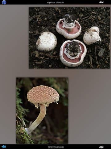 Mushrooms Info screenshot 8