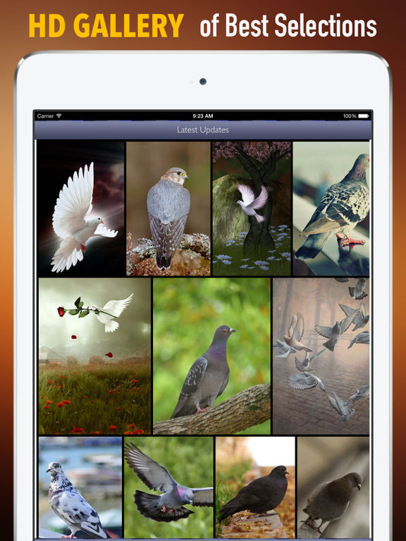 Pigeon Wallpapers HD: Quotes Backgrounds screenshot 6