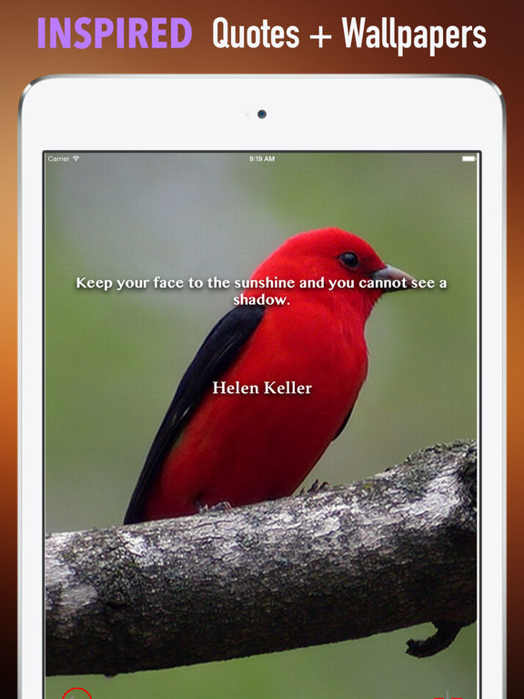 Sparrow Wallpapers HD: Quotes Backgrounds screenshot 10