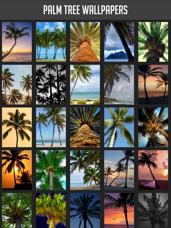 Palm Tree Wallpaper screenshot 6